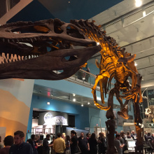 T-rex skeleton from the Lullabot / Pantheon Party held at the Baltimore Science Center